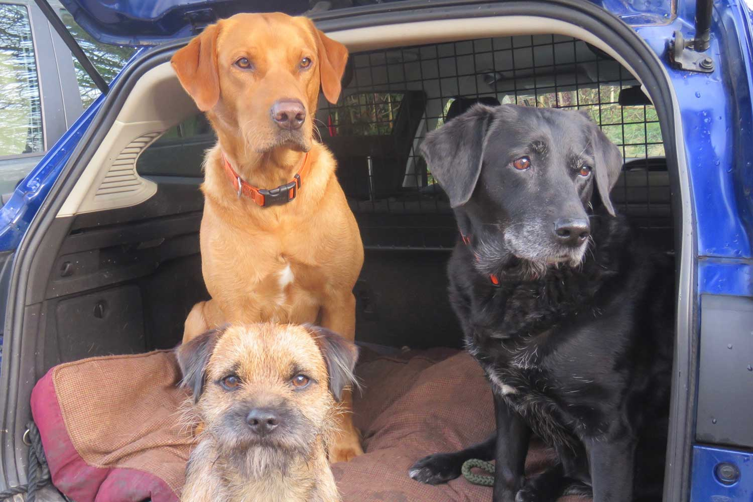 Friendly Family Pets   Bed & Breakfast, Nether Wallop, River Test Valley, England