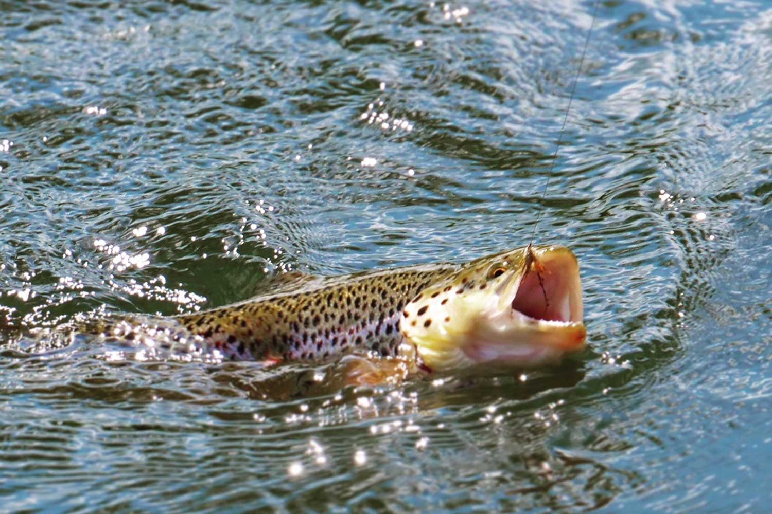 Fishing Beats on the River Test | Fishing Packages with Bed Breakfast and Meals